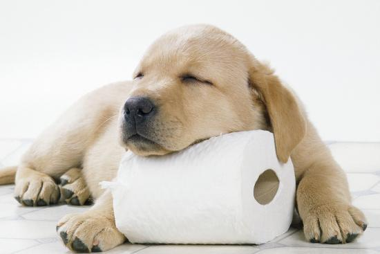 A guide on how you can toilet train a puppy