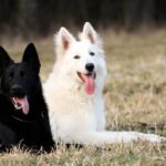 Black and white GSD
