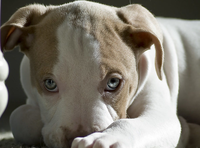 Blue Fawn Pit