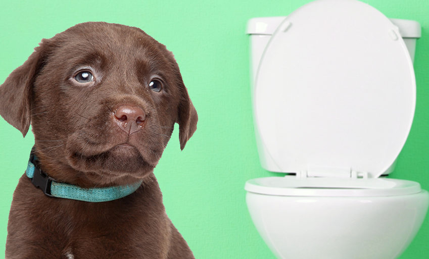 How-To-Potty-Train-A-Puppy
