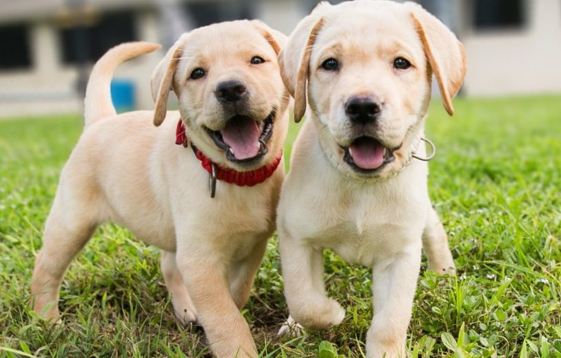 Smilling puppies
