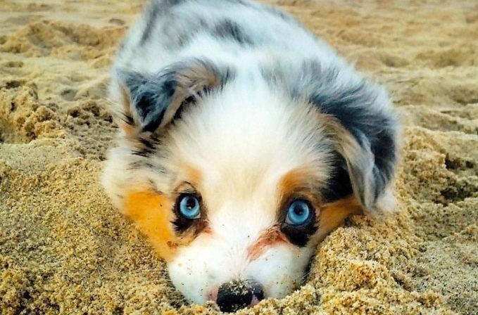 cutest-puppy-dog
