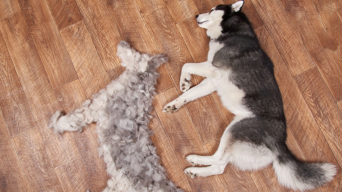 shedding in dogs