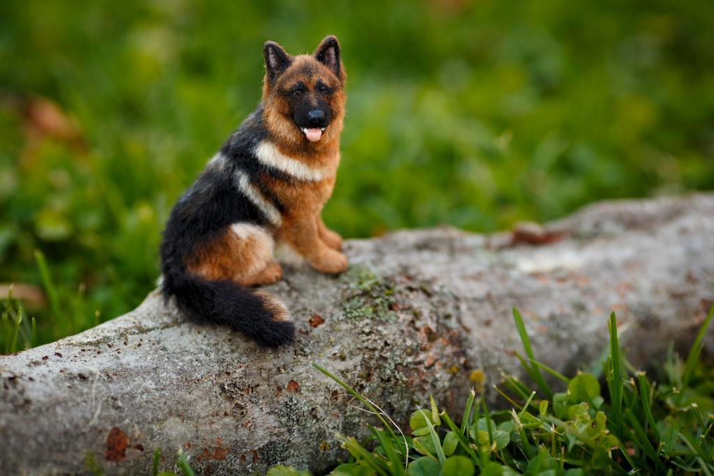 _miniature_german_shepherd