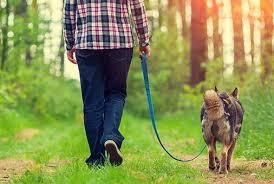 trained dog on a leash