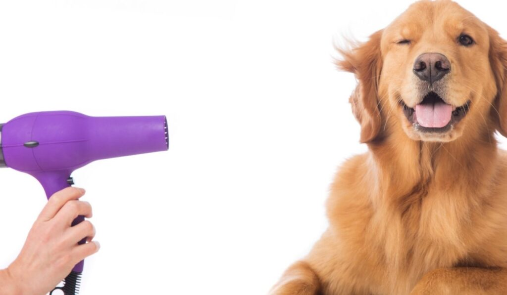Grooming dog dryer